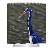 Tricolored Heron Pose Shower Curtain