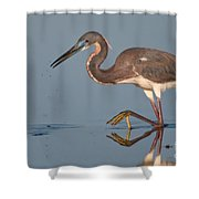 Tricolored Heron Stepping Shower Curtain