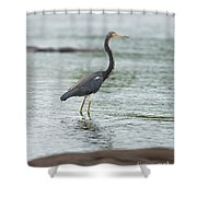 Tricolored..  Shower Curtain