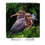 Tricolored Siblings Shower Curtain