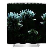 Trifolium Montanum Shower Curtain