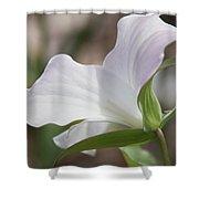Trillium Backside Shower Curtain