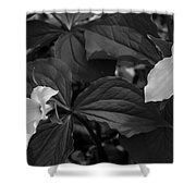 Trillium Bw Shower Curtain