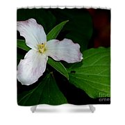 Trillium Shower Curtain