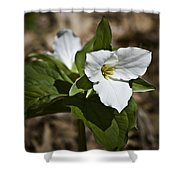 Trillium Grandiflorum Shower Curtain
