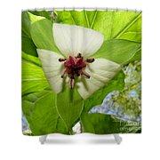 Trillium Wildflower Shower Curtain