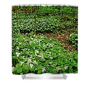Trillium Woods Iv Shower Curtain