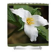 Trillum Wild Flower  Shower Curtain