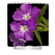 Trio In Purple Shower Curtain