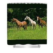 Trio In Spring Shower Curtain