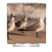 Trio  Shower Curtain