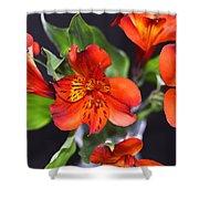 Trio Of Alstroemeria Inca Flowers-4 Shower Curtain
