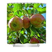 Trio Of Apples Shower Curtain
