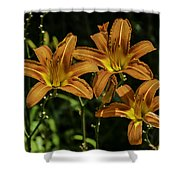 Trio Of Orange Tiger Lilies Shower Curtain