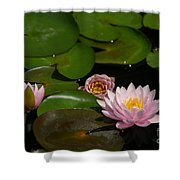 Trio Of Pink Lotus Waterlilies Shower Curtain