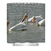 Trio Pelicans Shower Curtain