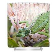 Trioceros Jacksonii - Jackson's Chameleon - Maui Hawaii Shower Curtain