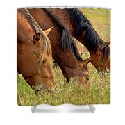 Triple Mustang Treat Shower Curtain
