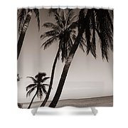 Triple Palms Shower Curtain