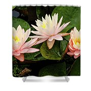 Triplet Water Lilies Shower Curtain
