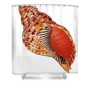 Triton Shell On White Vertical Shower Curtain