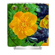Trollius Blossom Shower Curtain