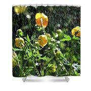 Trollius Europaeus Spring Flowers In The Rain Shower Curtain