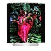 Anthurium Red Tropical Flower Shower Curtain