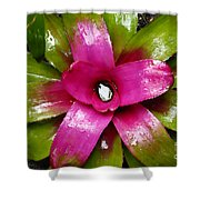 Tropic Wonder Shower Curtain