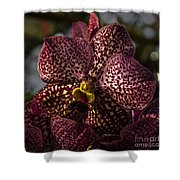 Tropical Beauty Shower Curtain