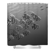 Tropical Black And White Shower Curtain
