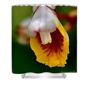 Tropical Bloom 8 Shower Curtain