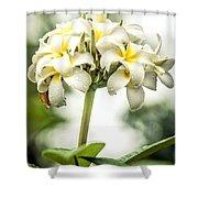 Tropical Flower 7 Shower Curtain