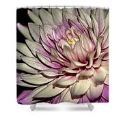 Tropical Flower 8 Shower Curtain