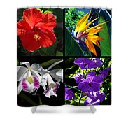 Tropical Flowers Multiples Shower Curtain