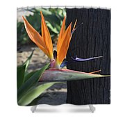 Tropical Garden Photo Of A Bird Of Paradise  Shower Curtain