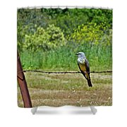 Tropical Kingbird Shower Curtain