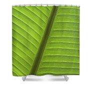 Tropical Leaf Detail Shower Curtain