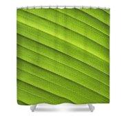 Tropical Leaf Patterns Shower Curtain