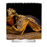 Tropical Mantispid Shower Curtain