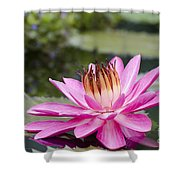 Tropical Night Flowering Water Lily Rose De Noche II Shower Curtain