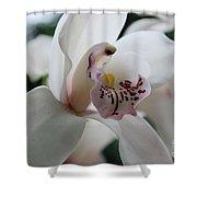 Tropical Orchid Shower Curtain