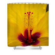 Tropical Reach Shower Curtain