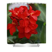 Tropical Red Canna Lilly Shower Curtain