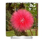 Tropical Red Puff Shower Curtain