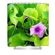 Tropical Rosewood In Hiding Shower Curtain