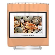 Tropical Shells... Greeting Card Shower Curtain by Kaye Menner