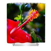 Tropical Splendor Shower Curtain