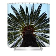 Tropical Summer Palm Tree Shower Curtain