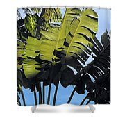 Tropical Sunlight And Shadow Shower Curtain